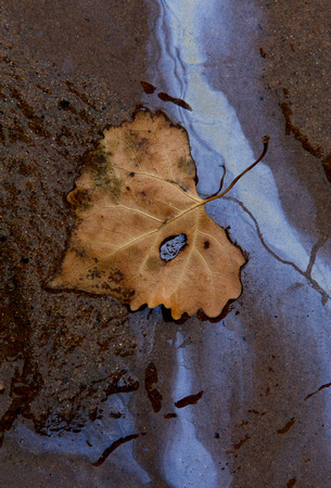 Leaf and Oil Reflection